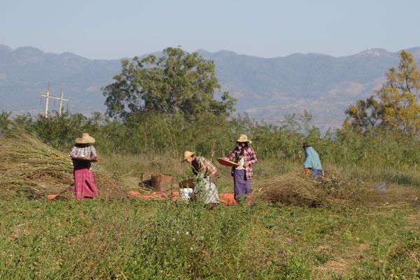 Reisebericht Myanmar Sehenswürdigkeiten Inle Lake