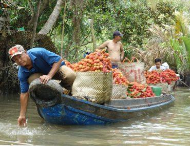 Tagestour-Mekong-Delta-und-Cai-Be-Floating-Market-Beitragsbild