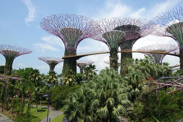 Singapur Sehenswürdigkeiten Marina Bay Gardens by the Bay Sky Trees