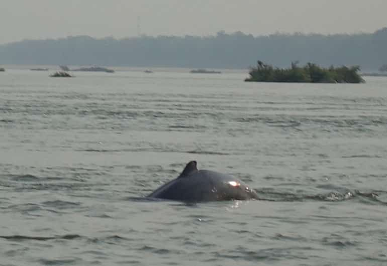 Kratie – Ausflug zu den seltenen Irawadi-Delfinen