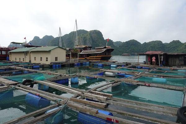 Reisebericht Vietnam Sehenswürdigkeiten Halong Bay Han La Bay und Cat-Ba Fischzucht
