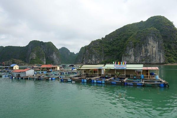 Reisebericht Vietnam Sehenswürdigkeiten Halong Bay Han La Bay und Cat Ba Fischzucht