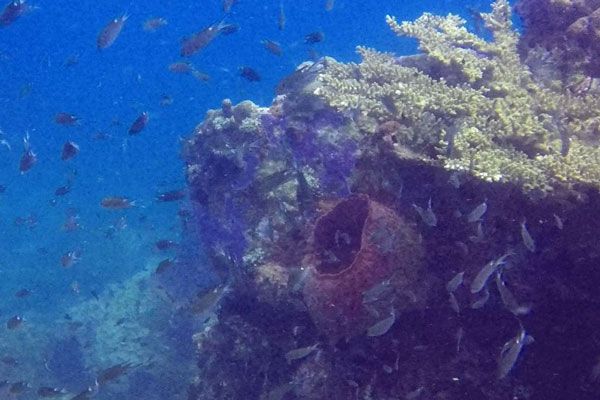 Perhentian Islands Malaysia Tauchen Tokong Laut