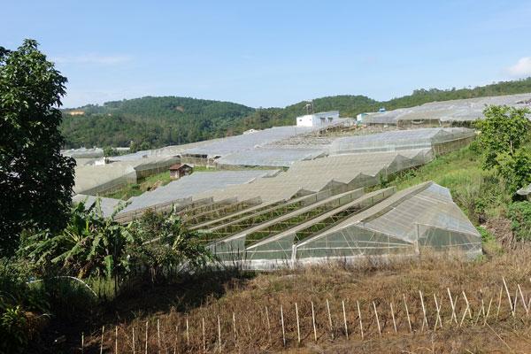 Reisebericht Vietnam Sehenswürdigkeiten Da Lat Flower Farm