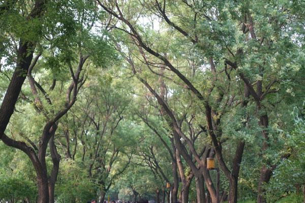 Peking Sehenswürdigkeiten Baihai Park
