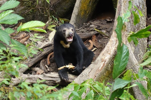 Sepilok Bornean Sun Bear Conservation Center