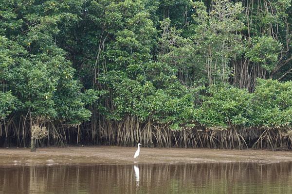 Brunei Sehenswürdigkeiten Bandar Seri Begawan Bootstour Mangrovenwald