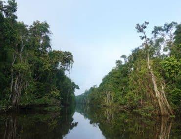 Kinabatangan River Tour Sabah Beitragsbild