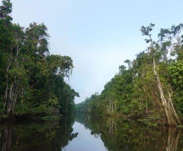 Reisebericht über unsere Kinabatangan River Tour in Sabah (Borneo)