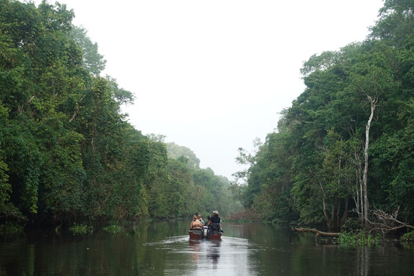 Kinabatangan River Tour Sabah Morning Cruise