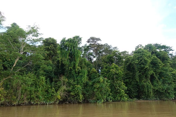 Kinabatangan River Tour Sabah Sunset Cruise