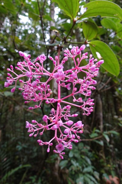 Mount Kinabalu Kinabalu Park Botanical Garden