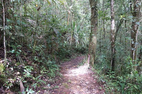 Mount Kinabalu Kinabalu Park Bukit Burung Trail