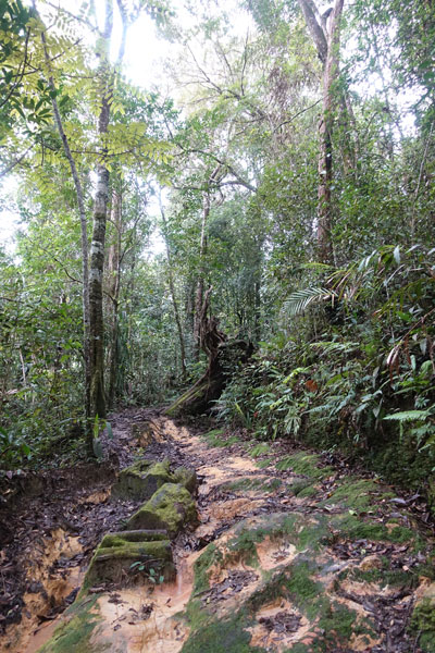 Mount Kinabalu Kinabalu Park Kiau View Trail