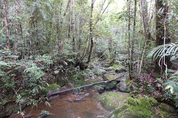 Mount Kinabalu Kinabalu Park Liwagu Trail