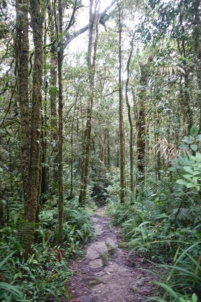 Mount Kinabalu Kinabalu Park Silau Silau Trail