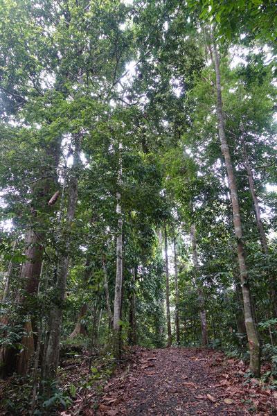 Sepilok Rainforest Discovery Center (RDC)