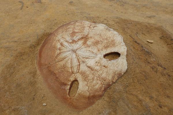Yehliu Geopark Tagesausflug von Taipeh Figuren erster Abschnitt Fossil