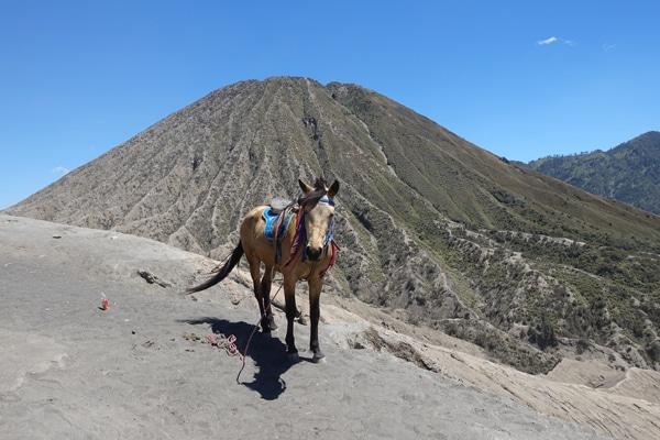 Besteigung des Mount Bromo
